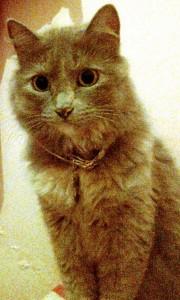 Esta es Niña, la mascota perdida en Cabecera.