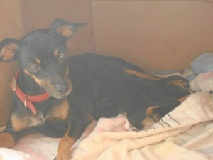 Esta es Lupe, la perrita que murió envenenada en Conucos.