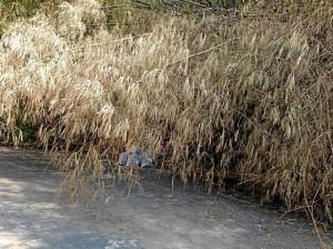 En las imágenes se ven las ramas caídas sobre la vía.