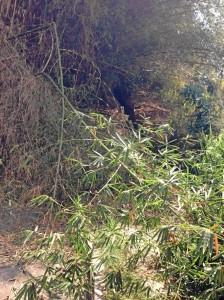 Los vecinos aseguran ver ratas, alacranes y ratones que ro-dean el sector y se anidan en estos arbustos.