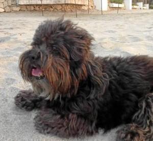 Este es Zizu, el perrito perdido en Conucos.
