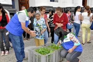 Las plantas se entregan en las entradas de las parroquias de la ciudad.