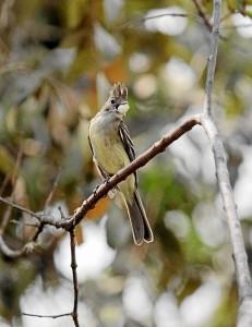 Distintas especies de aves como mariposas, carpinteros copetones y azulejos también convergen en la represa.