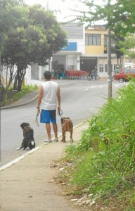 A diario se ven escenas como estas en Cabecera. La Periodista del Ba-rrio pide más control por parte de la Alcaldía y duras sanciones para los dueños de mascotas.