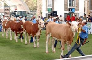 Agroferia 2013 abre, promueve y fortalece el crecimiento y promoción del sector agropecuario.