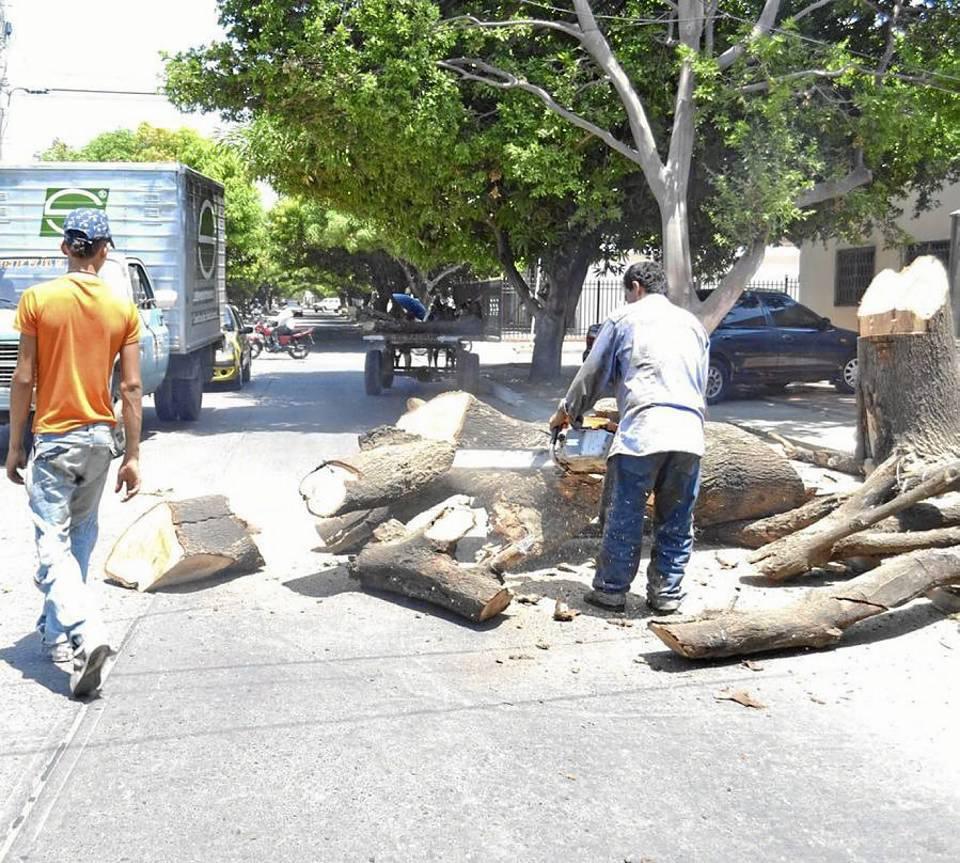 Crecen las denuncias por tala de árboles en Cabecera. (Foto de archivo y referencia).