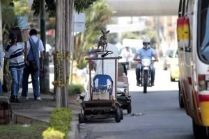 """La ciudadana recuerda que los recicladores además se encargan de alimentar a los perros que dejan abandonados en las calles, """"por eso merecen mejor trato"""". - Archivo / GENTE DE CABECERA"""