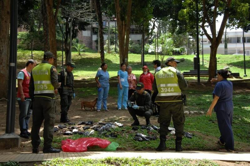 Las palomas fueron retiradas por uniformados de la Policía Ambiental