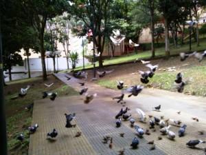 Marta Cecilia Gómez nos envió esta fotografía del vuelo de las palomas en el parque, un atractivo además para grandes y chicos.