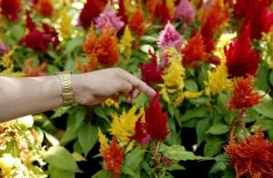 Jardines con orquídeas y flores nativas colombianas se podrán apreciar en el parque Mejoras Públicas