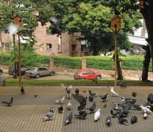 Los palomares por la Alcaldía de Bucaramanga están ubicados en el centro del parque Los Sarrapios. - Jaime Del Río / GENTE DE CABECERA