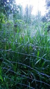 Esta es la cerca con alambre de púa de la que se queja la vecina de Pan de Azúcar. - Suministrada Luz Amparo Ortiz / GENTE DE CABECERA