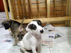 Esta son algunas de las mascotas que podrá encontrar este sábado en San Pío. - Suministrada /GENTE DE CABECERA