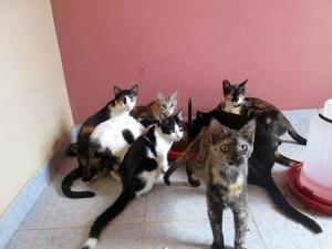 Estos son algunos de los gatos que estarán en adopción este sábado. - Suministrada /GENTE DE CABECERA