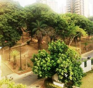 La vecina del parque Los Sarrapios espera que pronto se siembre el prado y se le haga mantenimiento, pues cada vez se ve más seco. - Suministrada / GENTE DE CABECERA