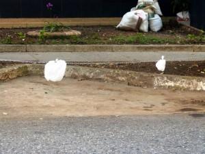 Con cadenas, un ciudadano bloqueó el estacionamiento en esta bahía pública. - Suministrada /GENTE DE CABECERA