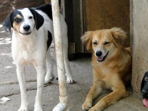 Estas son unas de las mascotas en adopción de la Fundación Caridad Animal. - Suministrada /GENTE DE CABECERA