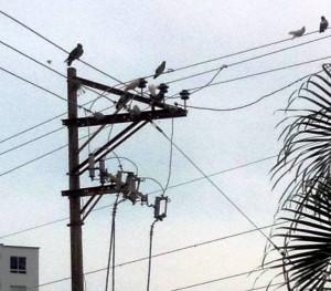 Con esta fotografía el ciudadano demuestra la cantidad de palomas que se avistan en las cuerdas de los postes. - Suministrada / GENTE DE CABECERA