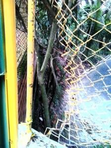 """""""En algunos casos dueños de mascotas rompieron la malla para meter sus animalitos a hacer sus necesidades allí"""", denunció el vecino"""
