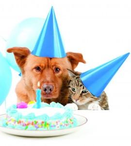 Tomada de www.petshopmagazine.com.br / GENTE DE CABECERA Será una fiesta divertida para las mascotas.