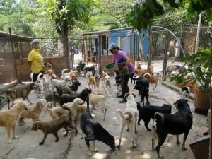 Este es el albergue de la fundación Caridad Animal. - Suministrada /GENTE DE CABECERA