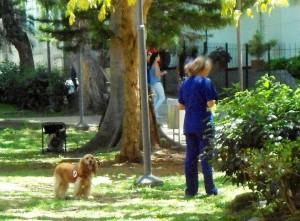 La presencia de mascotas es en ocasiones motivo de problema, sobre todo si no se lleva bolsa para recoger las heces. - Tatiana Celis / GENTE DE CABECERA