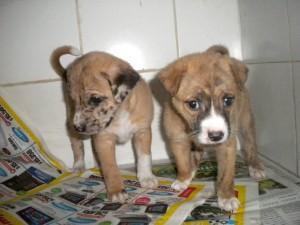 Estas son unas de las mascotas que se entregarán en adopción este sábado en el parque San Pío. - Suministrada / GENTE DE CABECERA