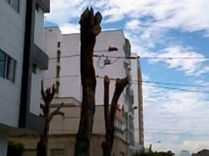 Así quedaron los tallos de los árboles en este sector de la ciudad. - Suministrada / GENTE DE CABECERA