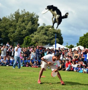 Todos los días en el pabellón múltiple se realizarán, en distintos horarios, los show de perros increíbles