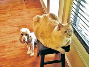 Las mascotas merecen ser cuidadas y protegidas