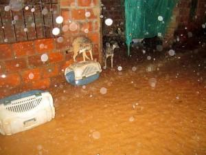 Esta es la situación, cada vez que llueve, en la Fundación Gatera Doña Felisa. - Suministrada /GENTE DE CABECERA