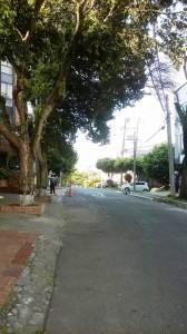 La rama pende de una cuerda de electricidad, en la carrera 37 entre calles 52 y 53. - Suministrada A.t. Mdez Hdez / GENTE DE CABECERA