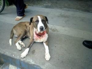 Así son algunos de los casos de maltrato que llegan a veterinarias del sector. - Suministrada  / GENTE DE CABECERA