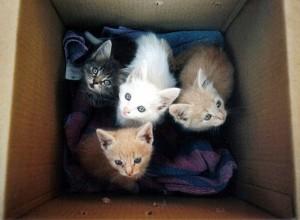 También dejan abandonadas camadas de gatos en lotes y entradas de barrios
