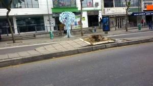 Las raíces de lo que fue un árbol grande, en la carrera 33 entre calles 47 y 48, crecieron tanto que rompieron el separador. - Suministrada Cristian Niño / GENTE DE CABECERA