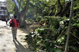 La poda se hace a la mayoría de árboles que conforman esta zona verde de Cabecera. - Fotos: Laura Herrera / GENTE DE CABECERA