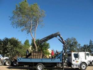 Jorge Afanador, arquitecto, urbanista y ambientalista propone que, como se ha hecho en varias ciudades del mundo, se trasplanten los árboles que interrumpen las obras del tercer carril