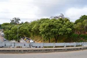 El sector de la Puerta del Sol hasta el viaducto García Cadena es el que más cantidad de árboles tiene, en el tramo de las obras que promueven la Alcaldía de Bucaramanga y la Gobernación de Santander.