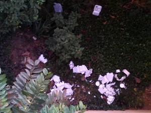 En la imagen se evidencian los restos de las envolturas de alimentos que dejan en zonas verdes. - Suministrada / GENTE DE CABECERA