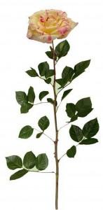 Esta es la rosa de jardín, ideal para una mamá elegante y amorosa