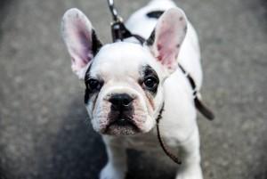 Banco de imágenes/ GENTE DE CABECERASe hace un llamado a los propietarios de mascotas, para que la tenencia implique también responder con los deberes que les compete como dueños.