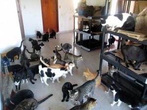 Los perros y gatos de la Gatera Doña Felisa esperan la ayuda de quienes deseen contribuir para su manutención.  - Suministrada /GENTE DE CABECERA