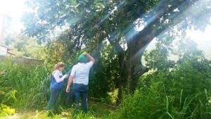 Funcionarios de la CDMB estuvieron en el sitio inspeccionando que realmente este Caracolí tiene bastantes años de vida. - Suministrada /GENTE DE CABECERA