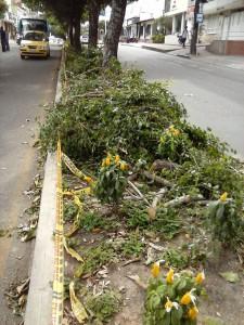 La tala en el separador de la calle 56, en Conucos, destruyó las plantas recién sembradas.  - Suministrada / GENTE DE CABECERA