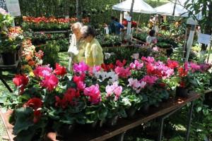 Festival de orquídeas, en el parque Mejoras Públicas.