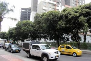 Una líder del sector de Mejoras Públicas solicita la poda de 22 árboles del separador de la avenida La Rosita, de la carrera 27 a la 28. - Fabián Hernández / GENTE DE CABECERA