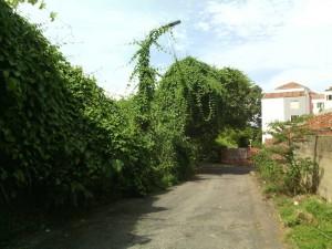 La calle 66 entre carreras 44 y 45 necesita mantenimiento en sus zonas verdes. - Suministrada / GENTE DE CABECERA