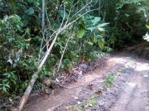 Carretera construida y árboles destruidos alrededor. - Suministrada / GENTE DE CABECERA