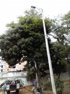 Este es el árbol de mamón que podría ser talado para construir la primera cancha del barrio Las Mercedes. - Suministrada / GENTE DE CABECERA
