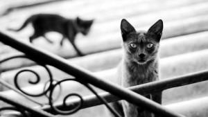 Los gatos sobre los tejados de un grupo de casas del sector tienen 'en jaque' a los vecinos. - Tomada de Internet / GENTE DE CABECERA